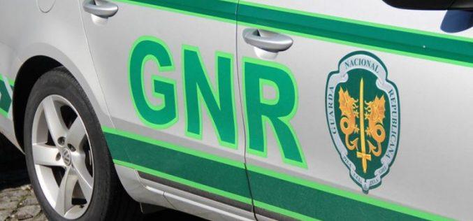 GNR recupera égua avaliada em 6.000 euros