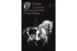 Cavalo Lusitano é rei nas Caldas da Rainha em Maio