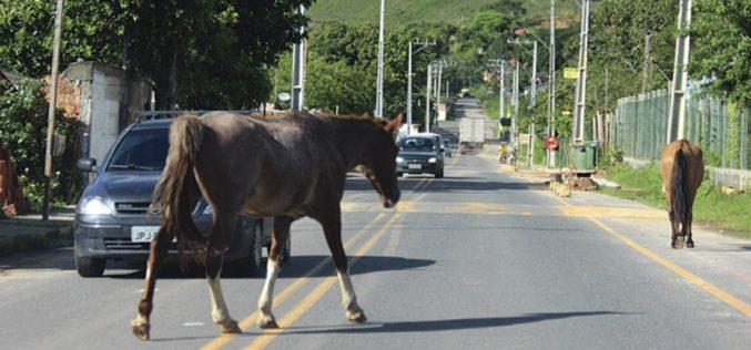 Dez cavalos apreendidos em Elvas