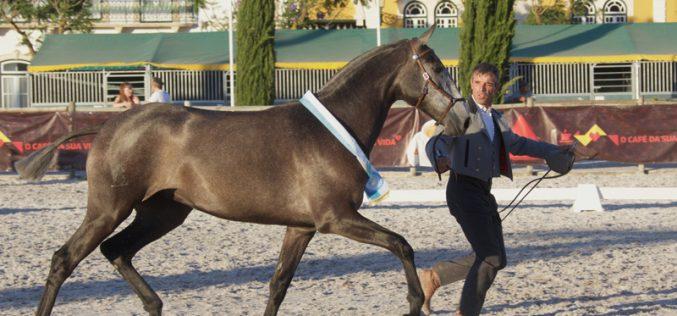 Ouro para a égua «Nora das Faias» campeã da ExpoÉgua 2019
