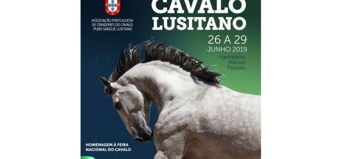 Festival Internacional do Cavalo Lusitano começa hoje para se prolongar até sábado