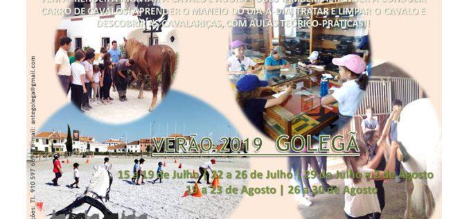 Verão 2019 – Golegã – Estágios de Equitação e de Atrelagem
