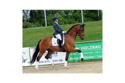 Campeonato de Cavalos Novos (Bundeschampionate): Ana Teresa Pires apurada com «Braveaux»