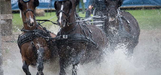 Equestrian sport boosted with allocation of major events through 2021