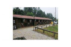 Cavalos apreendidos em Vermil recuperam no Centro Hípico de Guimarães