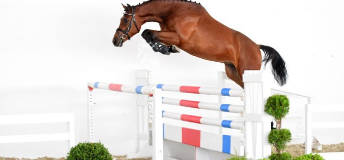 1st Online Jumping Horse Auction by Paul Schockemöhle starts