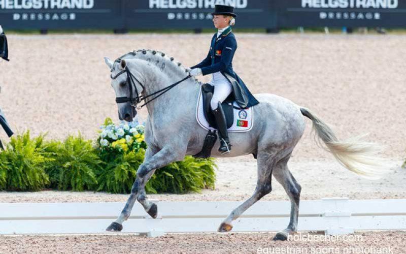 Campeonato da Europa de Dressage 2019: 9 Cavalos Lusitanos inscritos