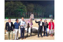 Fim-de-semana em cheio em Ponte de Lima com a XIII Feira do Cavalo