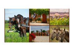 Turismo equestre, um nicho que alia tradição e futuro