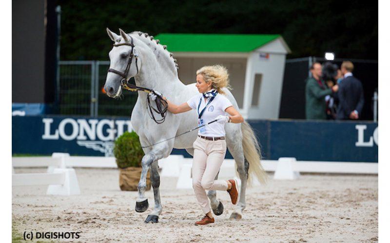 Campeonato da Europa de Dressage 2019: Cavalos passam na 1ª inspecção veterinária (VÍDEO)