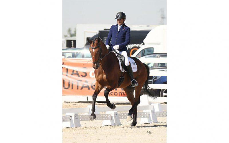 Lusitano «Gladiador do Lis» campeão nos Critérios para Cavalos Novos em Espanha