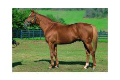 Cavalos de corrida encontrados com crinas cortadas
