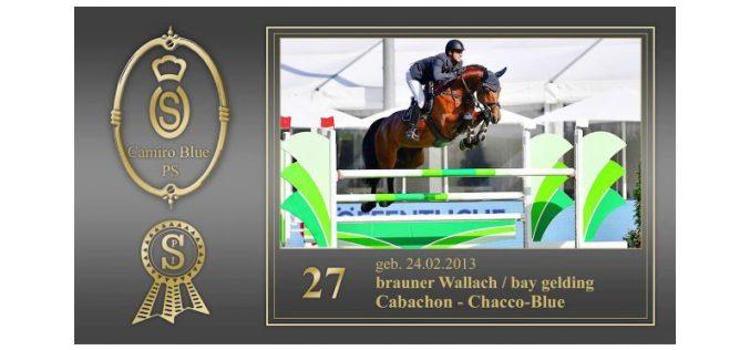 Leilão de Cavalos de Desporto PSI (VÍDEOS)