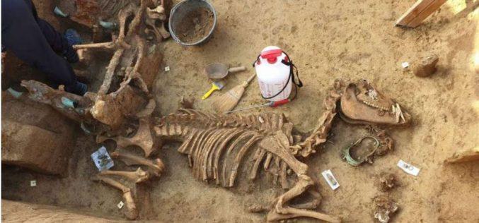 Biga romana é descoberta na Croácia