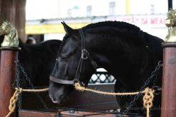 Feira Nacional do Cavalo 2019: Dia dos Criadores – 7 de Novembro a não perder…