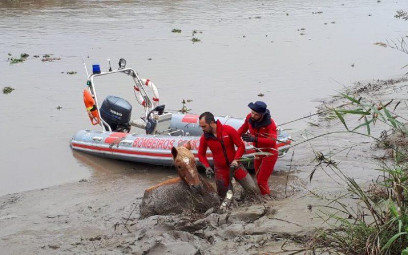 Cavalo preso no rio em Porto Alto salvo pelos bombeiros