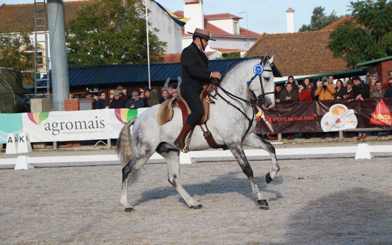 Feira Nacional do Cavalo 2019: «Luar da Caniceira» o Lusitano Campeão dos Campeões 2019