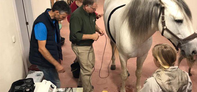 Reabilitação equina: veterinários de oito países vêm a Portugal para curso