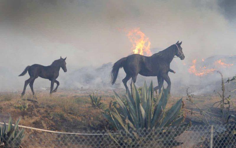 Cavalo conseguiu trazer de volta família dos incêndios na Califórnia (VÍDEOS)