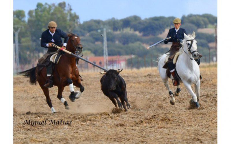Associação do Cavalo de Raça Luso Árabe por Terras Alentejanas