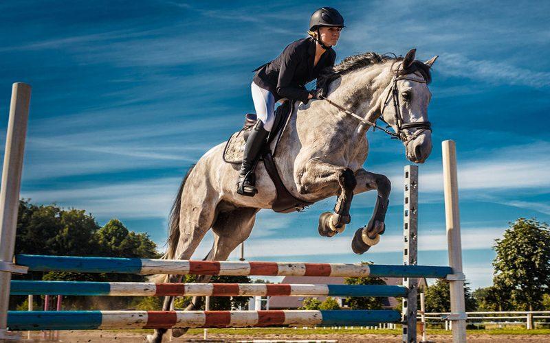 Desporto equestre – Como minimizar lesões nos cavalos