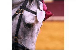 Melhor Cavalo Lusitano de Toureio em 2019