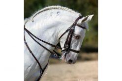 Campeonato Regional Centro de Equitação de Trabalho arranca na Golegã