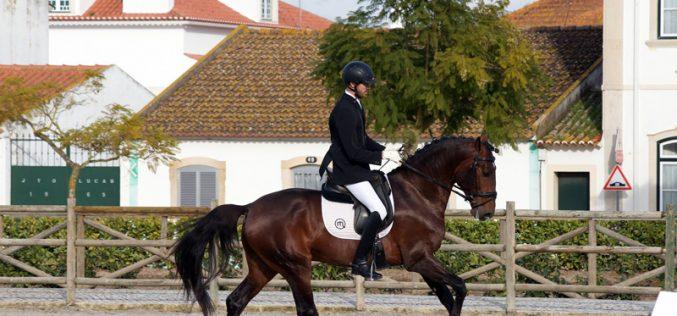 Projecto Cavalos Lusitanos de Ensino: 4 Novos conjuntos apurados