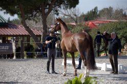 CDI3* Cascais: 52 Cavalos passam no Vet-Check