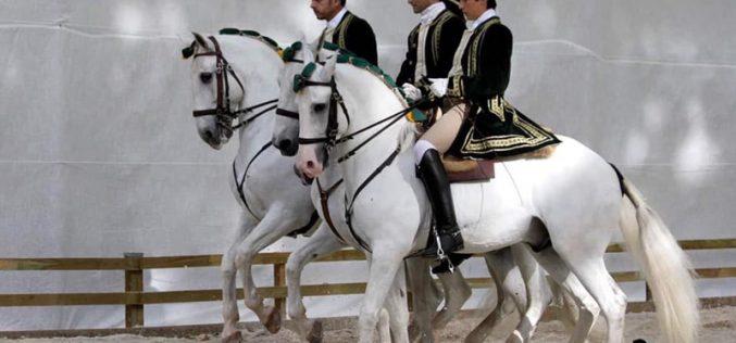 Covid-19 cancela Feira do Cavalo Lusitano do Oeste