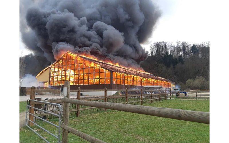 9 Cavalos de Gerfried Puck morrem em incêndio (VÍDEO)