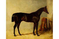 Era uma vez um cavalo de corrida chamado «Filho da Puta»