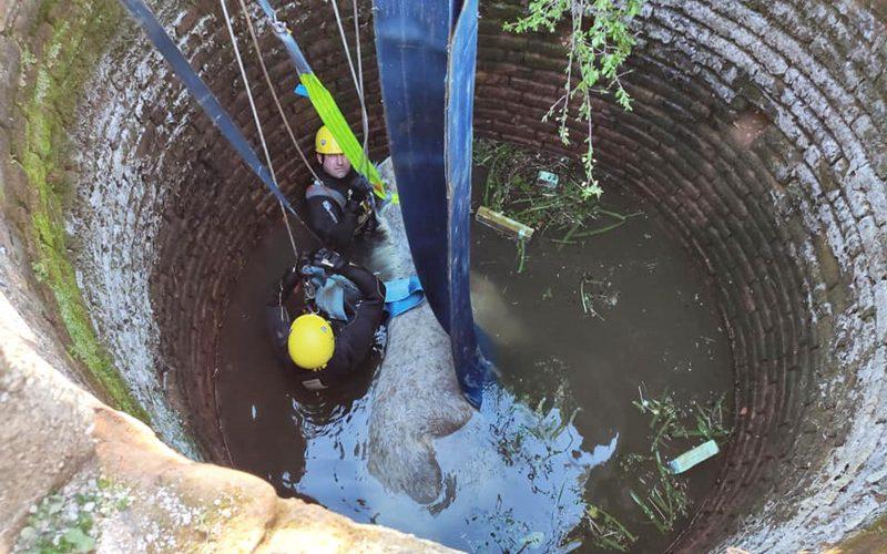 Bombeiros resgatam cavalo caído em poço em Abrantes