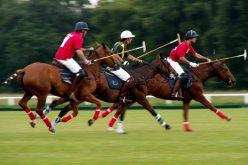Como escolher um bom cavalo de desporto?