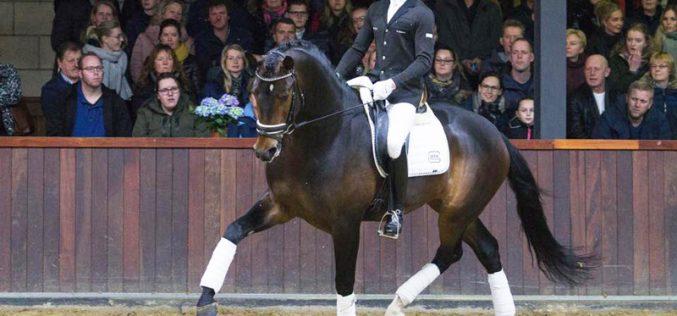 """Mundial de Cavalos Novos de Dressage na """"corda bamba""""…"""
