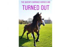 Isabell II transferiu cavalos para Hampton Court Palace