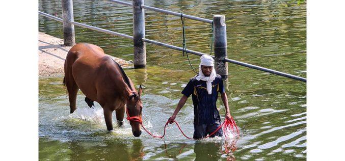Peste Equina Africana mata 42 cavalos de corrida em Korat