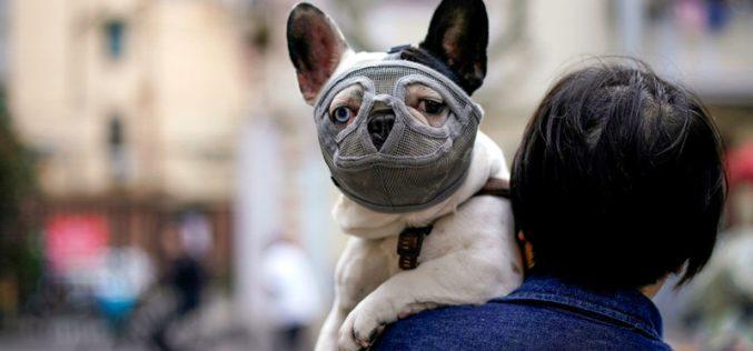 Covid-19: Devem os animais ser testados?