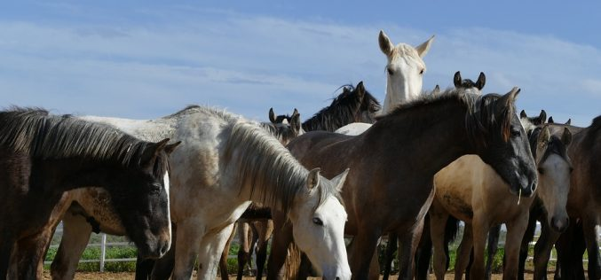 More than 100 horses dead as African Horse Sickness strikes Thailand