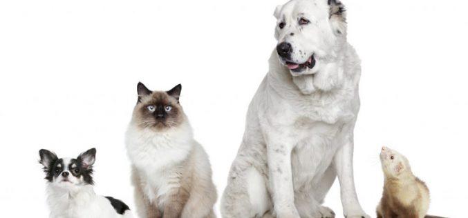 Obrigatoriedade de comunicar óbito e desaparecimento de animais de companhia entrou em vigor
