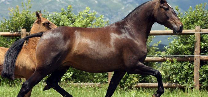 APSL: Filme de promoção de Coudelarias Portuguesas de Cavalo Lusitano