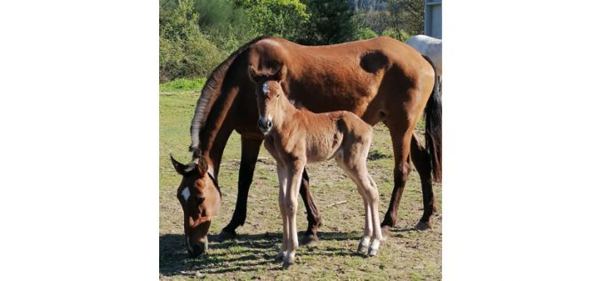 Quinta São Jorge: Roubo de 6 cavalos e material de equitação
