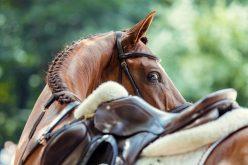FEP anuncia regras para realização de provas equestres