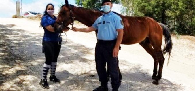 GNR recupera cavalo roubado em Marinhais