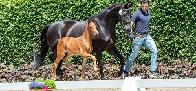De Royal first foal crop convincing