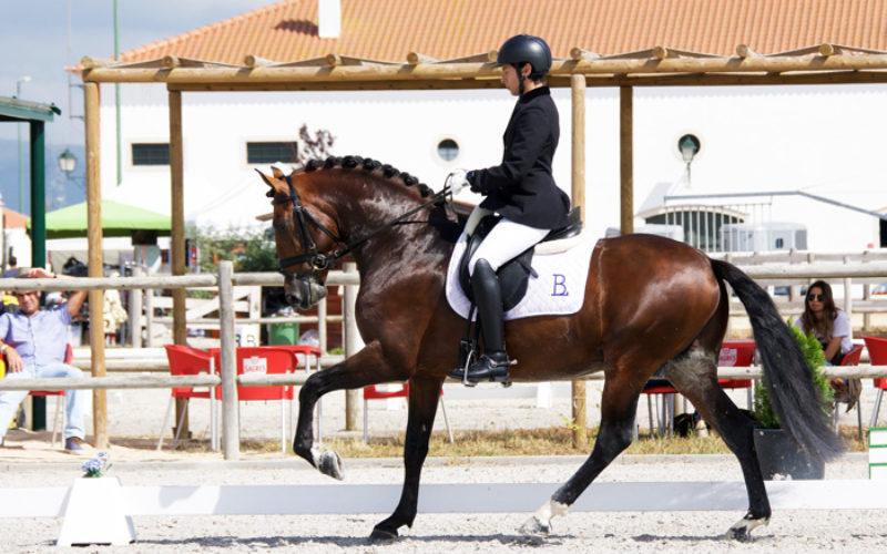 Projecto para Cavalos Lusitanos no Ensino – 29 de Junho