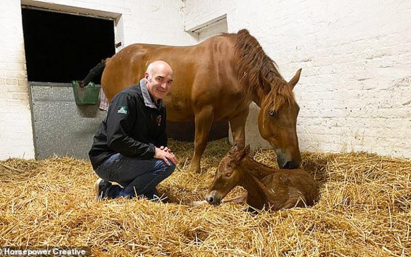 A raça Suffolk Punch pode ser salvo da extinção no Reino Unido