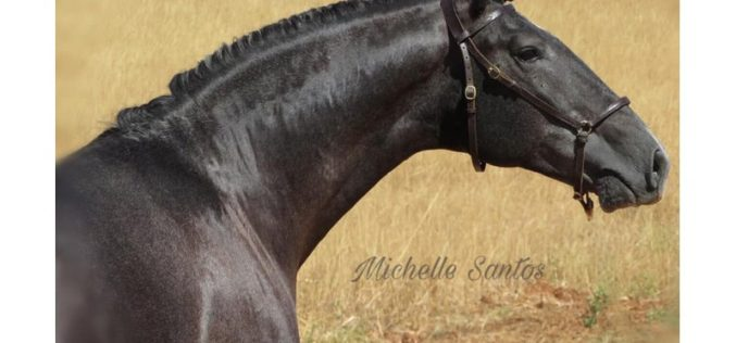 Covid-19: Brasil estuda soro com anticorpos de cavalo para combater o novo coronavírus