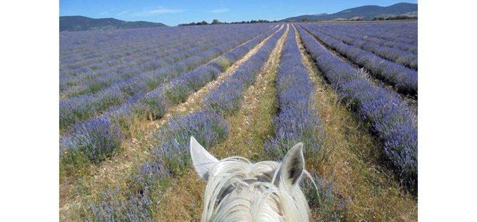 Autoridades francesas detêm suspeito de atacar cavalos (VÍDEO)