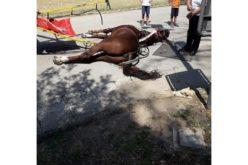 """Cavalo de carruagem turística morre em dia de """"calor escaldante"""""""